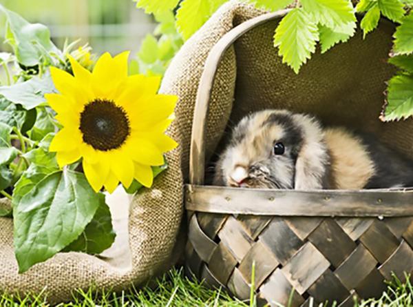 Canicule et forte chaleur aider son lapin