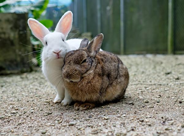Cohabitation entre deux lapins