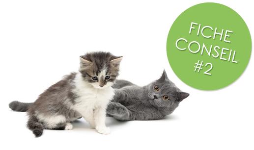 Faire cohabiter deux chats