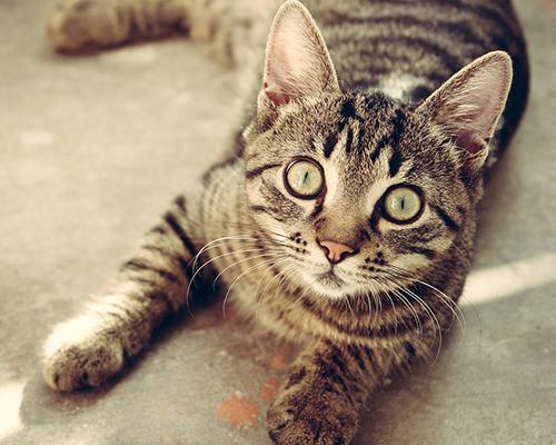 Pour accueillir un ou plusieurs chats ou chatons.