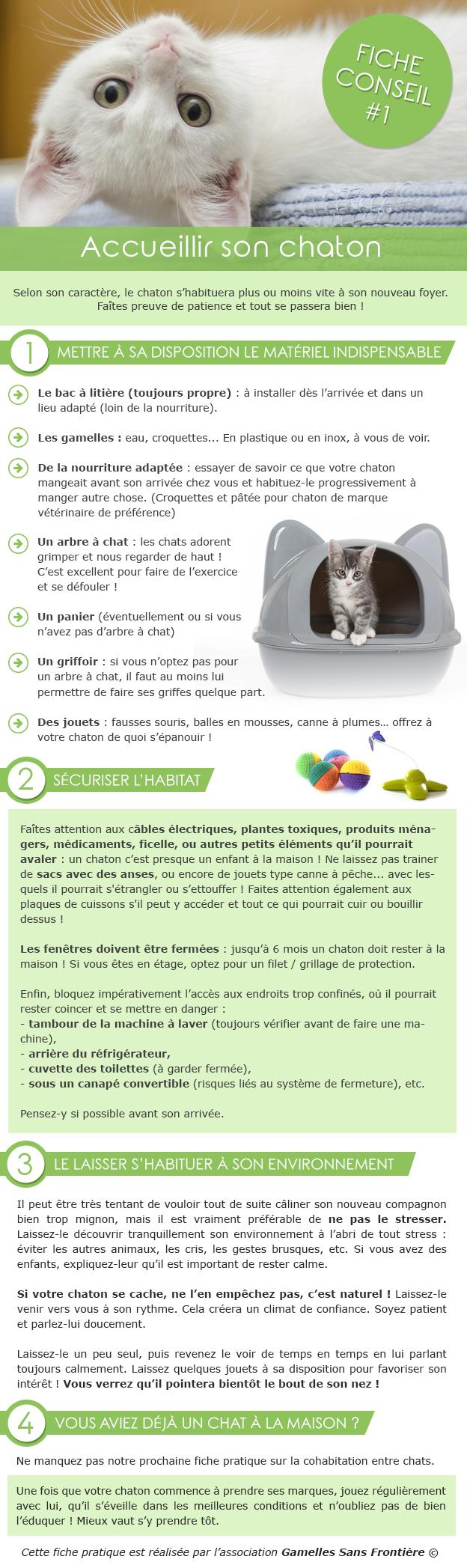 Adoption chaton conseils