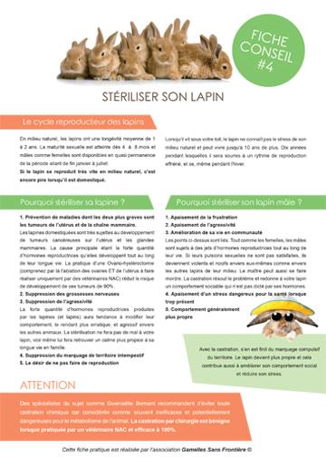 Fiche conseil lapin : stérilisation