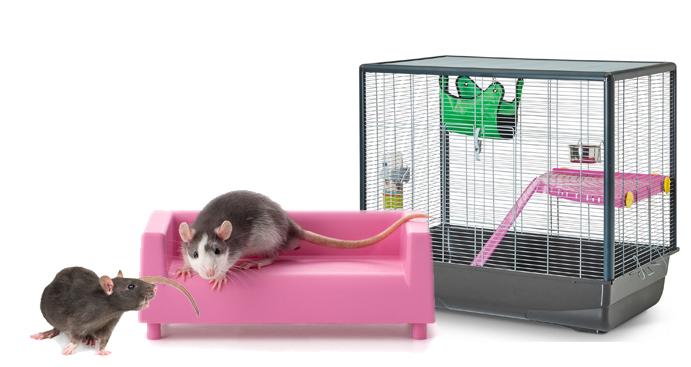 Quelle cage pour mes rats ?