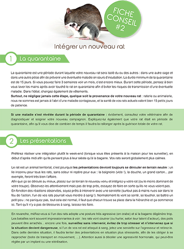 Fiche conseil rats : intégration