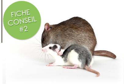 Intégration d'un nouveau rat