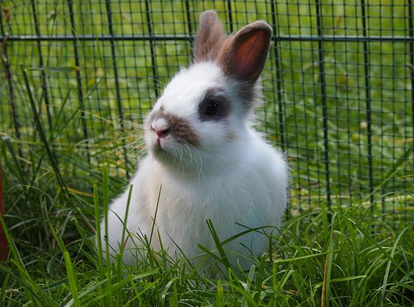 Un habitat idéal pour son lapin