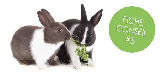 Faire cohabiter deux lapins