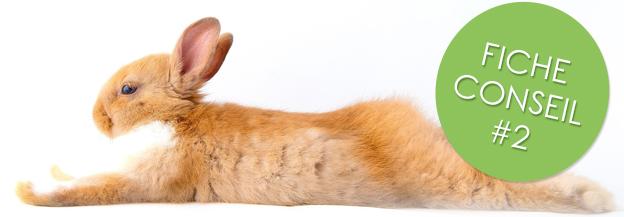 Canicule protéger son lapin en été